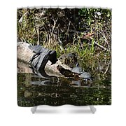 Turtles And Gator Shower Curtain