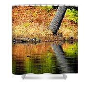 Turtles At The Edge Shower Curtain