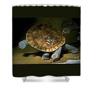 Turtles Float Shower Curtain