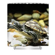 Turtles In The Water Shower Curtain