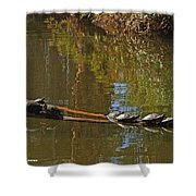 Turtles On A Log Shower Curtain
