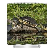 Turtles Sunning Shower Curtain