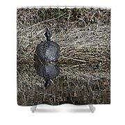 Turtles Sunning On Bank Shower Curtain