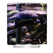 Turtles Swimming Shower Curtain