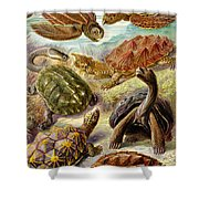 Turtles Turtles And More Turtles Shower Curtain
