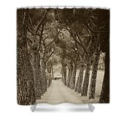 Tuscan Pines Shower Curtain