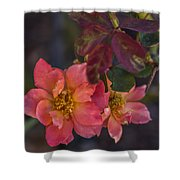 Tuscan Sun Rose Shower Curtain