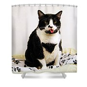 Tuxedo Cat Sticking Out Her Tongue Shower Curtain by Catherine Sherman