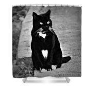 Tuxedo Cat Shower Curtain