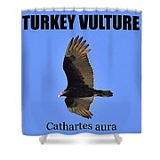Turkey Vulture Educational Shower Curtain