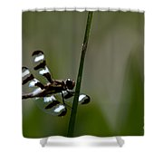 Twelve Spotted Skimmer Shower Curtain