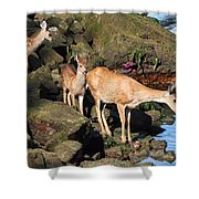 Twin Fawns And Mother Deer On The Shore Shower Curtain