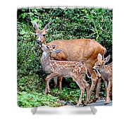 Twin Fawns And Mother Deer Shower Curtain