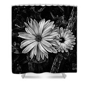Twin Flowers And A Branch  Shower Curtain