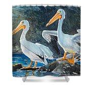 Da208 Twin Pelicans By Daniel Adams Shower Curtain