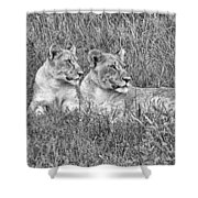 Twins V2 Shower Curtain