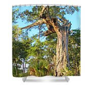 Twirling Tree Path Shower Curtain