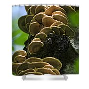 Twist Of Shrooms Shower Curtain by Christina Rollo