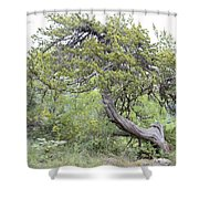 Twisted Cedar Shower Curtain