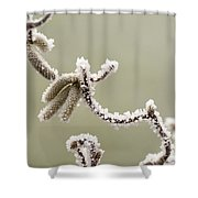 Twisted Frost Shower Curtain by Anne Gilbert