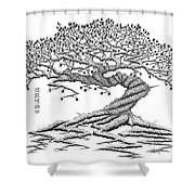 Twisted Gnarled Black Pine Shower Curtain