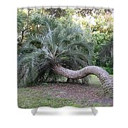 Twisted Palm Shower Curtain
