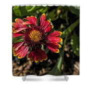 Twisted Petals Shower Curtain