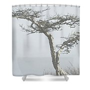 Twisted Tree 2 Shower Curtain