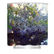 Twisted Tree Shower Curtain by Carey Chen