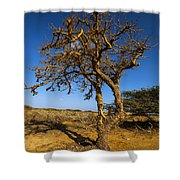 Twisted Tree Shower Curtain