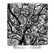 Twisted Trunks Shower Curtain