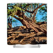 Twisting Trees Shower Curtain