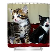 Two Adorable Kittens Shower Curtain