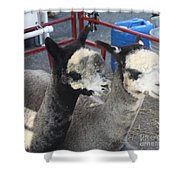 Two Alpacas Shower Curtain