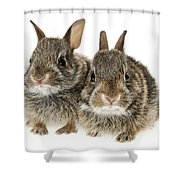 Two Baby Bunny Rabbits Shower Curtain