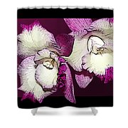 Two Baby Orchids Shower Curtain