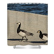 Two Barnacle Geese Shower Curtain