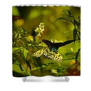 Two Beautiful Creations Shower Curtain