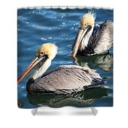 Two Beautiful Pelicans Shower Curtain