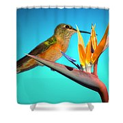 Two Birds Of Paradise Shower Curtain