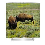 Two Bison Shower Curtain