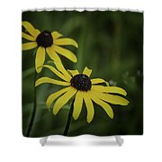 Two Black Eyes On The Macomb Orchard Trails Shower Curtain