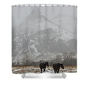 Two Black Horses In The Snow   #7983 Shower Curtain