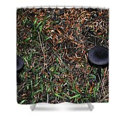 Two Black Stools Shower Curtain