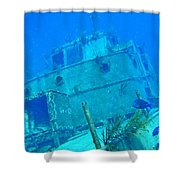 Two Blue Tang On A Ship Wreak Shower Curtain