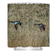 Two Blue Winged Teal Shower Curtain