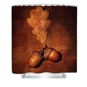 Two Brown Acorns Shower Curtain