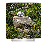 Two Brown Pelicans Shower Curtain