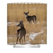 Two Bucks Shower Curtain
