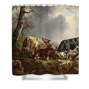 Two Bulls Defend Against A Cow Attacked By Wolves Shower Curtain by Jacques Raymond Brascassat